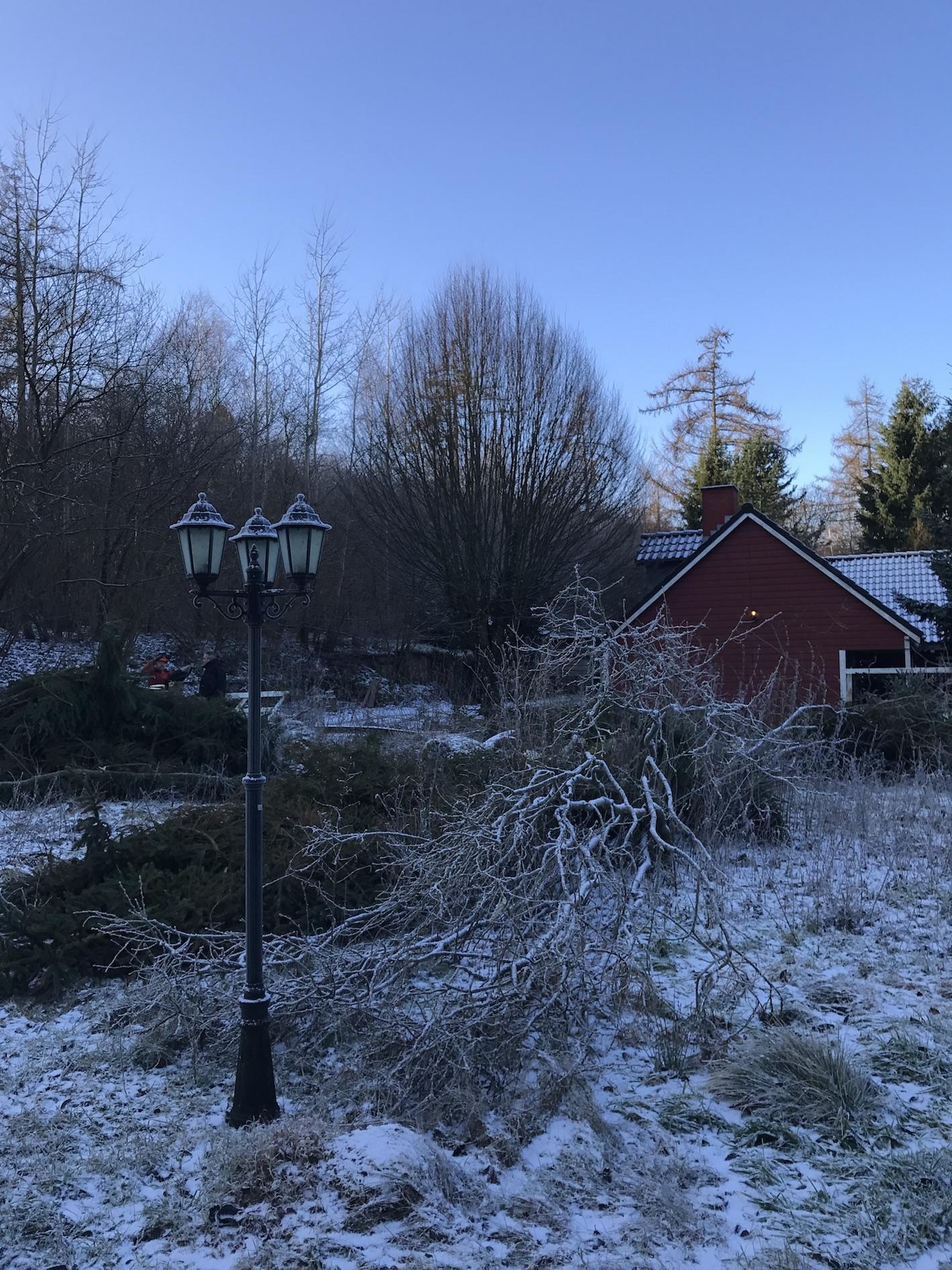 Topkapning af træer pris – Pileflethegn jem og fix